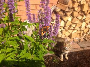 Katten spanar in en fjäril som besökte blommorna.