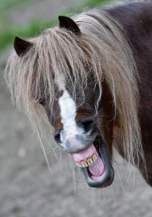 Fakta: Solkänsliga djur   Djur med ljusa pigment och tunnare päls kan få problem vid stark sol. Det gäller till exempel hästar med ljus mule, albinohästar, kor och grisar.