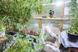 Vacker stol i växthuset kan vara bra när man vill ta en paus från vattnandet.