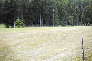 En bild från förra sommarens torka.