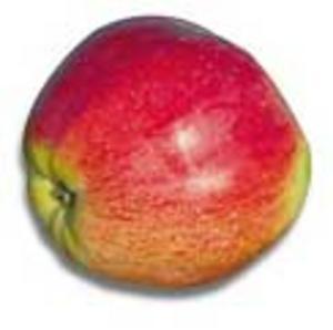 Har du en massa äpplen du inte behöver? Skänk den till andra fruktsugna! Foto: Göran Widerberg