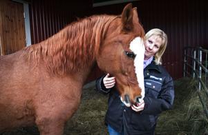 Sverige är ett föregångsland när det gäller djurhållning. Gårdens hästar har alla bekvämligheter hos René Stenklyft.
