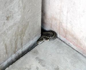 Ormen valde att ta skydd i en springa vid Centrumhuset.