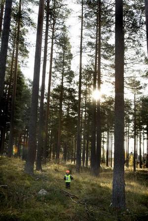 Full fart. Cedrik Norin hittade en älg ute i skogen. Nu var den ju inte riktigt utan bara en inplastad bild, men ändå.