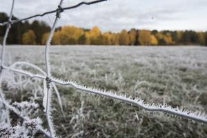 Första frosten betyder vintertid.