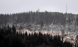 Stormen Ivar lämnade ett plockepinn av träd efter sig i december 2013.