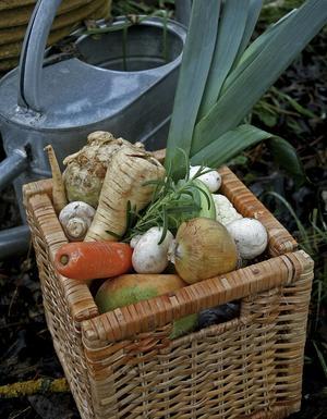 Hösten kommer med härliga rotsaker och mustiga grytor. Nu är det tid för stora smaker och rikligt med rötter.
