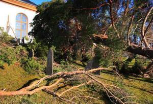 Ett tjugotal tallar föll rakt över kyrkogårdens gravstenar.   Foto: Bertil Alexander