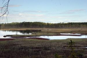 Svansjön som ligger belägen i urskogen.