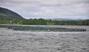Vattudalens fisk AB har polisanmälts för misstänkt miljöbrott i Ströms Vattudal. Mätningar har visat på större fosforutsläpp än vad odlingstillståndet tillåter.