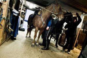 6.00 Uppstigning.7.00 Hästarna matas.7.30 - 8.30 Mockning.7.30 - 8.00 Hästarna släpps ut.8.30 - 9.30 Frukost, yoghurt, müsli, macka, Ljusnan och kaffe. Långfrukost på fredagar, då kommer Travronden.9.30 Körning, två svängar med upp till fyra hästar.12.30 Lunch (som är förberedd dagen före)13.30 Körning, nu med en eller två hästar.15.00 - 16.00 Hästarna får hösilage.16.00 Ompyssling av hästarna. Skoning, smörjning, massage mm.19.00 Kvällshö.20.00 Kraftfoder och släckning för natten i stallet.20.00 Kvällsmat. Lite tv-tittande med fokus på sporten och viktiga Brynäs.22.00 Nattinatt.