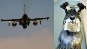 Huruvida hundarna som störts av militärflyget är av rasen dvärgschnauzer eller inte, framgår inte av anmälan.