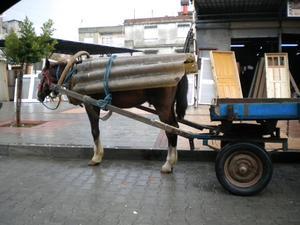 Hittade denna hästen i Adana i Turkiet med ett alldeles eget regnskydd