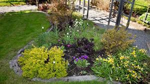 Variera. I trädgårdsmästare Regina Frejds egen trädgård växer perenner högt, lågt och brett. Varierat är det bästa, menar hon. Bra perenner som håller hela sommaren är till exempel kärleksört, höstsilverax och rödbladig alunrot.