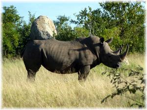 För en vecka sedan var jag på safari i Krüger parken i norra Sydafrika och såg
