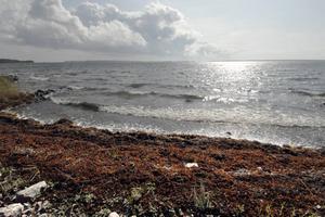 Östersjön är försurad, men vilken stat är den största boven? Foto Hasse Holmberg / SCANPIX