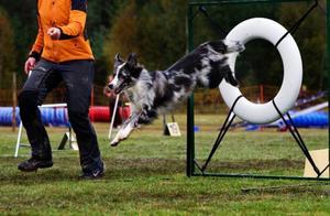 Cirka 200 hundar tävlar i agility i Lugnvik under helgen.