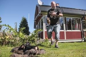 Ralph Persson har fått 15 valpar i sin kennel där han föder upp björnhundar av rasen plotthund.