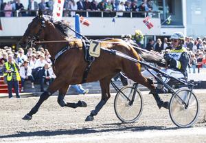Sanity startar i Östersund på fredag. Hedershästen är still going strong trots sina numer nio år fyllda. Här syns han med Örjan Kihlström inför Åby Stora våren 2014 där han blev tvåa på enorma tiden 1.11,2 full distans.