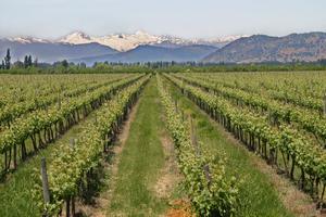 Chile är ett gammalt vinland. De första vinrankorna kom redan med spanjorerna på 1500-talet. Men det är först under senare år som en kvalitetsinriktad vinodling med sikte på export på allvar kommit igång.