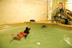 Sjuåriga dvärgpudeln Tessie har opererat ett knä och får simma för att bli starkare i benet igen.