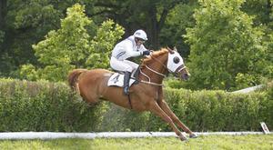 Hästen Lights Out stod som segrare efter Grand National 2010.