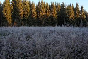 Frostig äng vid Sännsjövallen.