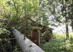 Ett av träden har rasat över en av stugorna på tomten.