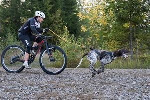 Tina och Giro i spåret. Det gäller att hjälpas åt, när hunden är trött får föraren ge mer och när föraren är trött får hunden dra.