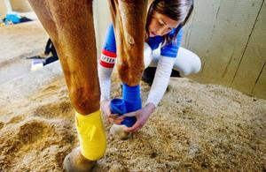 Ann Lindqvist förbereder hästen Poppe för horseballmatch.