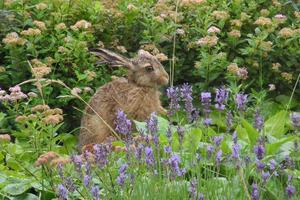 I juli hade vi en liten harpalt i trädgården. Den besökte oss flera dagar i rad och var ganska orädd som synes.
