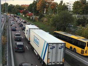 Köerna i riktning mot Korsängsmotet – en bra bit från olycksplatsen.