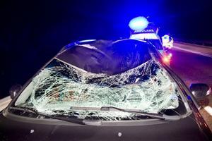 Bilens vindruta krossades av älgen.
