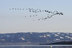 På väg. Fåglar lockar besökare.Foto: TT