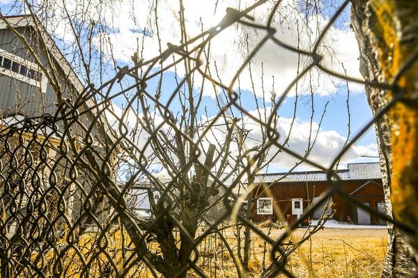 Våren är kanske bakom galler men det blir snart fri och knopparna brista ut i vårtjut.