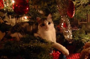 Katten Elza hittade en ny sovplats på julaftonen. Det var inte heller fel att leka med de roliga sakerna som hängde i granen.