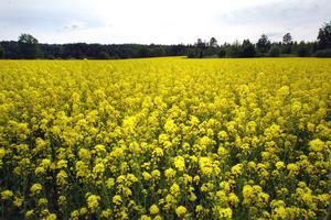 Att driva landsbygdsfrågor, fritt svävande utan koppling till och kunskap om de gröna näringarna, blir lätt till hinder för en positiv landsbygdsutveckling, skriver Stefan Lindskog.