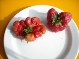 Hittade i jordgubbslandet dessa sammanväxta gubbar:9 stycken som liknar tänder och 3 stycken i formen av ett hjärta.