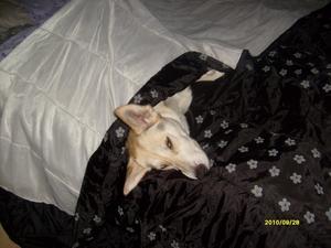Ja, varför inte bara ligga i husses o mattes säng när de inte är där?Våran Iza passar på när lusten faller in. Va bara tvungen att lägga överkastet på, hon riktigt mös.