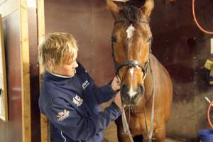 Han har god hand med djuren, Mattias Hjalmarsson från Ljusdal