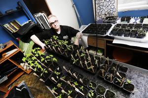 Håkan Bertilsson har redan sommarens odlingar på gång i gästrummet.