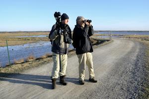 Ett fågelparadis. Torbjörn Arvidson och Clas Thor guidar i Oset-Rynningeviken.BILD: ANDERS ERKMAN