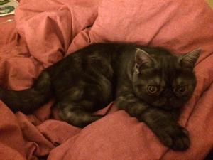 Katten Charlie