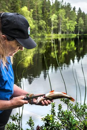 Med vana händer rensar Ingela Dahlin ur fisken.