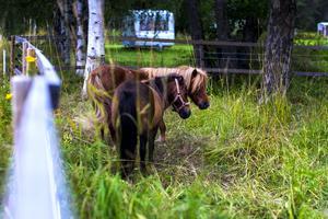 Betande hästar hjälper till att hålla landskapet öppet. Det ökar mångfalden och gör att fler arter trivs. Sedan är de såklart vackra att titta på.