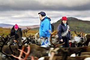 Nejla Sparrok Jonasson och Sylvia Sparrok försöker urskilja märkningarna i den stora renhjorden.
