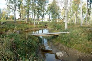 KANALER. Anders Högberg öppnade upp vattendragen på Falludden under sina grävningar så att vattnet från älven kan strömma igenom.