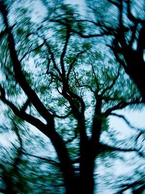 Om man vandrar i skogen och hastigt böjer huve´t bakåt för att titta upp i trädkronorna så kan man drabbas av yrsel. Bilden tagen genom att sikta med kameran i trädkronan och hastigt rotera kameran under exponeringen (1/30 sekund i detta fall).