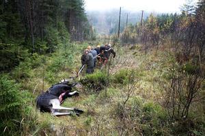 De flesta djur dödar inte andra djur, så därför vill inte jag heller göra det, skriver Martin Smedjeback i sin slutreplik till jägaren Ulrica Nykvist.