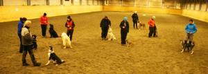 Varje söndag samlas hundägare i Strömsunds ridhus för att umgås och träna sina hundar.